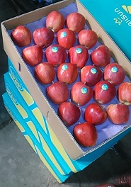 تفاح3